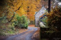 Autumn trees and Cottage