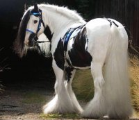Most beautiful horse I have ever seen