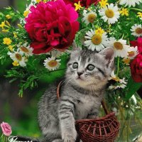 Cutte kitty and flowers