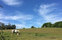 Horses and Clouds