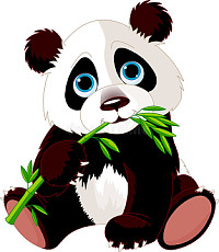Wild Panda eating bamboo.