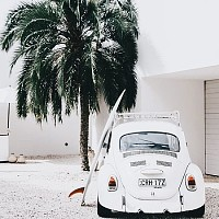 Fusca and palm tree