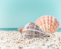 Tropical seashells