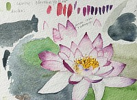 Water Lily sketch