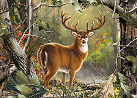 BACK COUNTRY BUCK