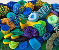 Coral Reef Cleaning