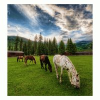 Horses On An Evening Meadow