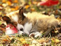 Napping puppy